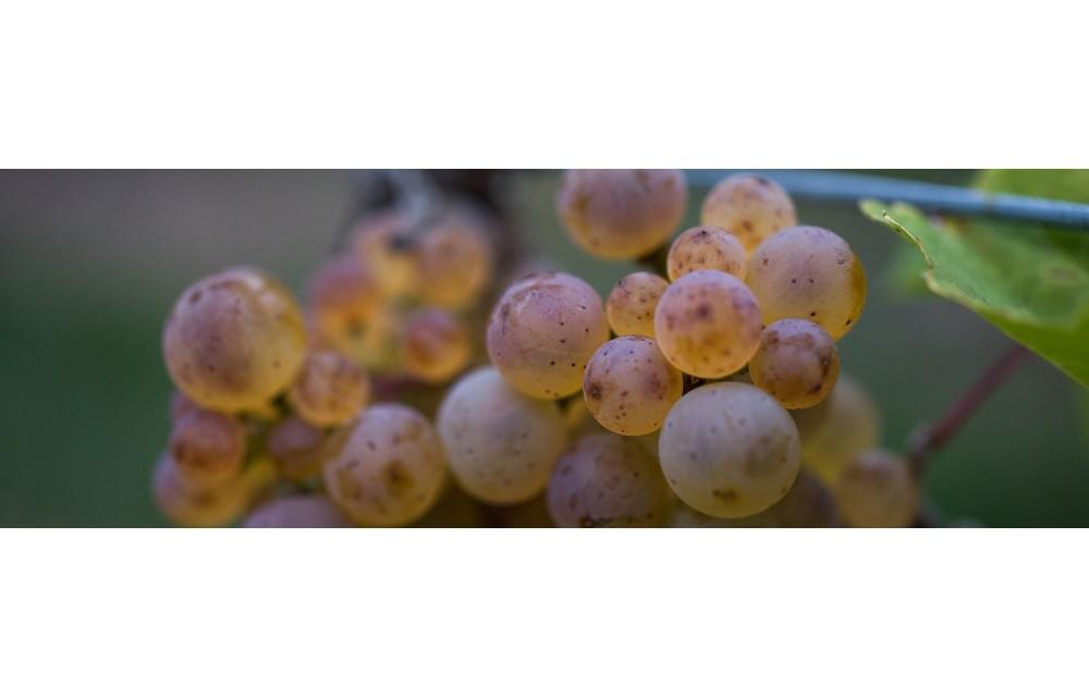 """Vins d'Alsace """"Classic"""""""