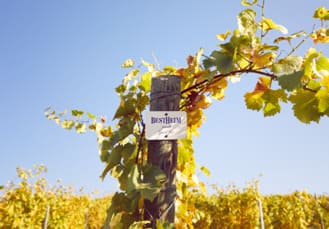 Vins d'Alsace Grands Crus