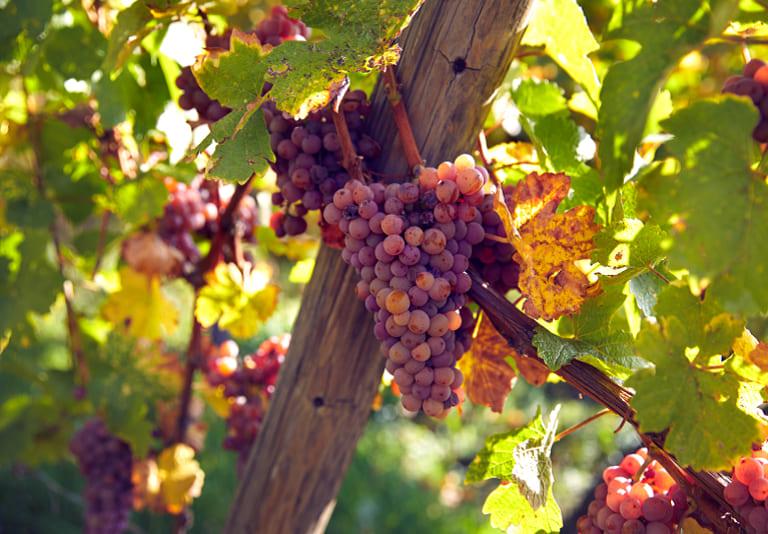 Chasseurs de Lune Wines
