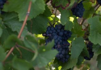 Chasseurs de Lune Wines Pinot Noir