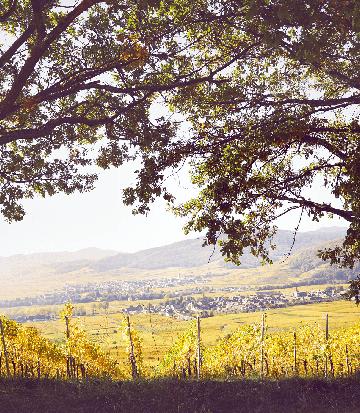 landscape-vines-autumn