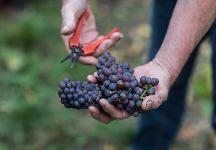 Chasseurs de Lune Wines Pinot Gris
